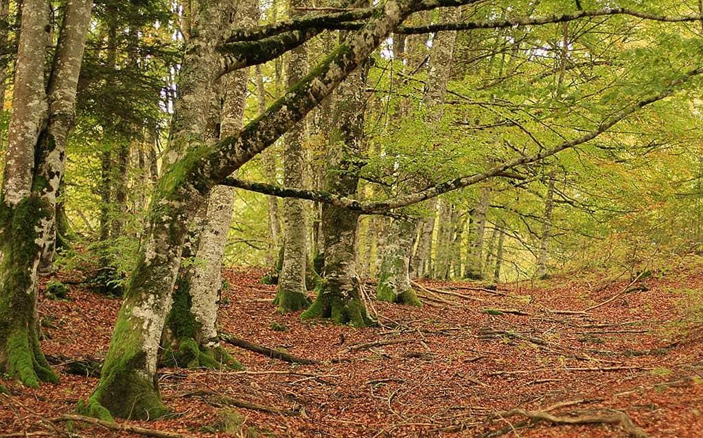 La Selva de Irati es un destino increíble para visitar en primavera.