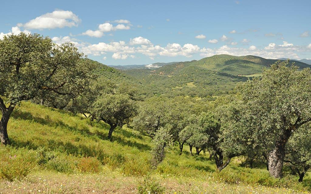 La Sierra de Aracena es uno de los mejores destinos para hacer una escapada rural de fin de semana en Andalucía