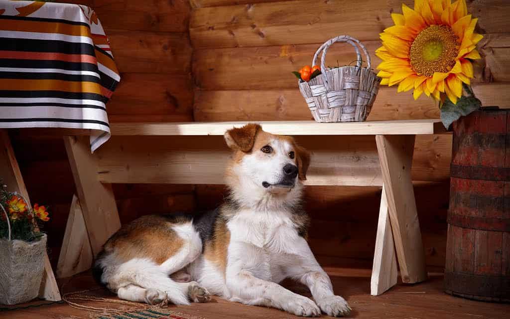 Las 9 mejores casas rurales que admiten perros en Granada